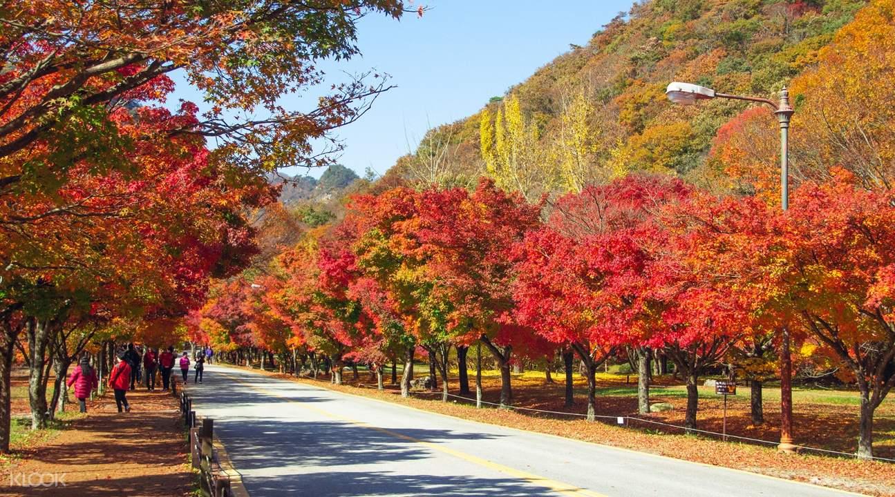 naejangsan national park pathway in seoul